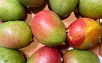 Foto van mango's